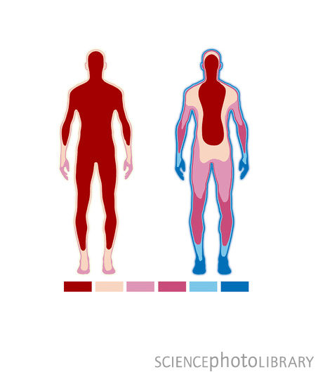 body temperature? What part of the body gives the most accurate